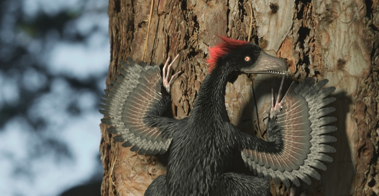 Ancient earth, The mystery of the feathered dragon